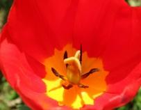 秦巴植物王国——爱你一万年
