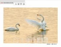"""恭贺西关印象7幅作品获""""2020年十堰市优秀摄影作品年度展"""""""