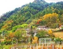 赏花海、摘秋果、看银杏...十堰这些绝美村落,惊艳整个秋天!