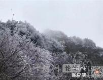 玉树琼花!雪后的武当雾凇美不胜收