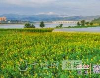「十堰」昨天在郧阳汉江边拍下的,也太太太美了吧!错过又要等一年