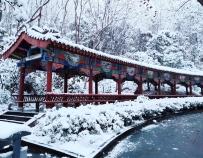 今晨的人民公园——雪