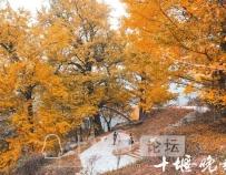 「十堰」秋意渐浓,来这9处赏银杏览秋色吧